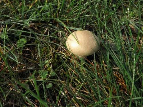 Mushroom Meadow Autumn Nature