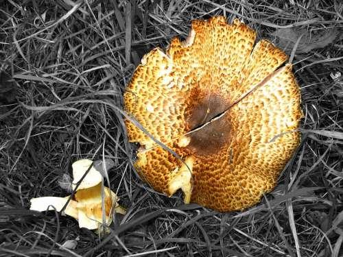 Mushroom Destroyed Schirmling Broken