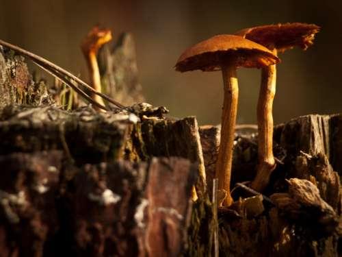 Mushrooms Nature Fungus Fungi Cap Plants Stump