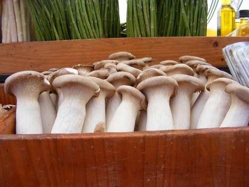 Mushrooms Mushroom Nature Plant Food Vegetables
