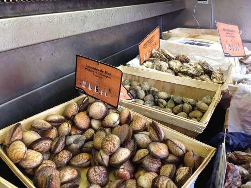 Mussels Sea Fruit Nice France Food