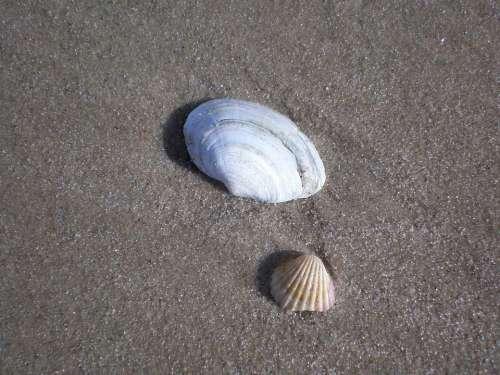 Mussels Baltic Sea Sea Animals Sand Beach Beach