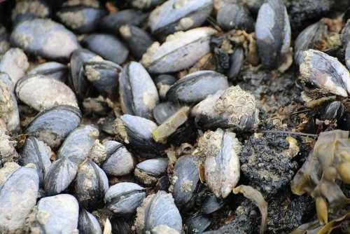 Mussels Watt Area Coastal Region Barnacles