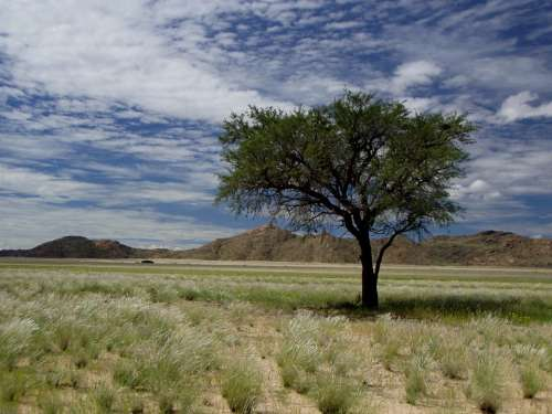 Namibia Africa Tree Clouds Travel Sky Landscape