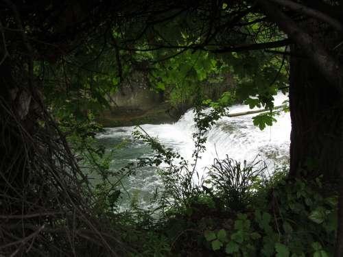 Nature Water Green Trees Shrubs