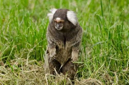 Nature Fluffy Zoo Wildlife Fur Ape Animal Mammal