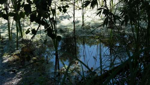 Nature Water Trueb Tree Plant Flora