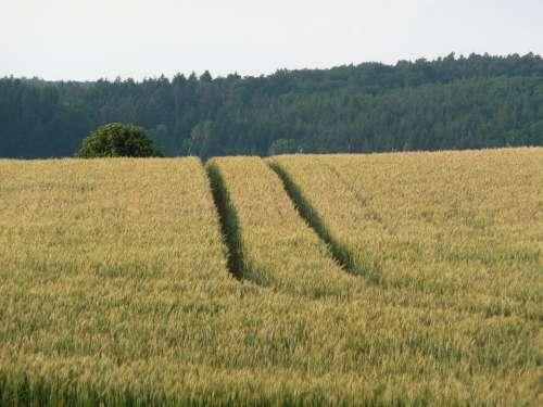 Nature Landscape Summer Grain Harvest