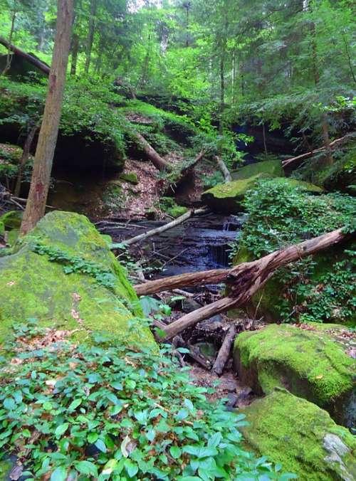 Nature Hiking Waterfall Rock Hike Scenery Alabama