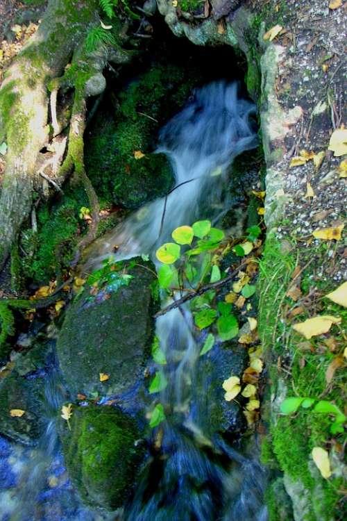 Nature Water Bach Murmur Waters