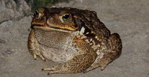Nature Frog Amphibian Animal