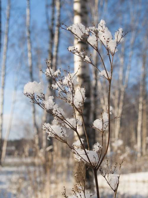 Nature Branches Beautiful Landscape Winter Snow