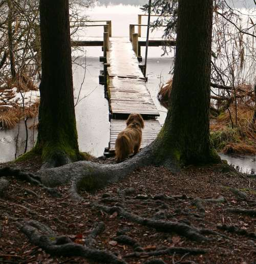 Nature Trees Root Animal Dog Waters Water Web