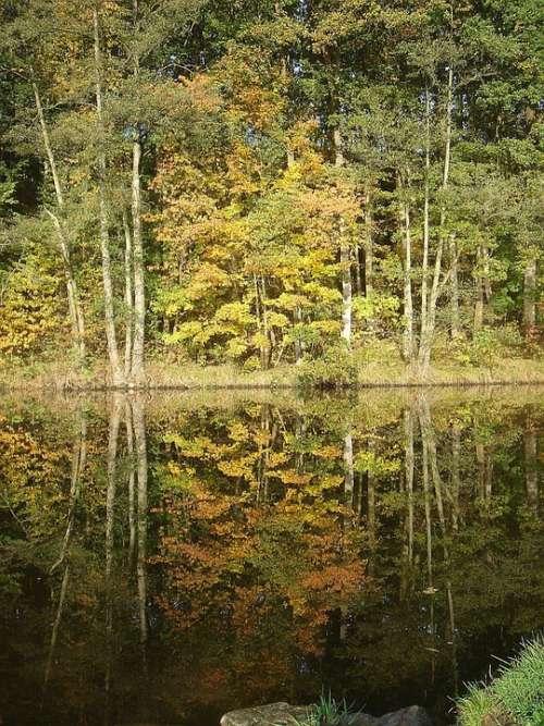 Nature Tree Autumn Water Reflection