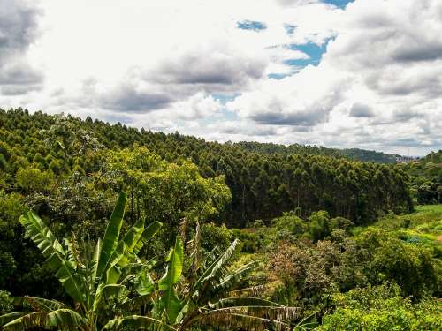 Nature Trees Green Fruit Plants Banana