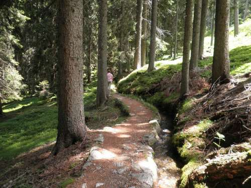 Nature Landscape South Tyrol Forest Away Bach
