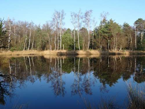 Nature Water Landscape Trees Mirror