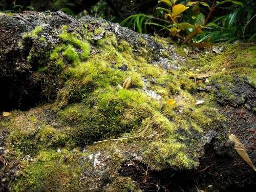 Nature Green Flora Soil