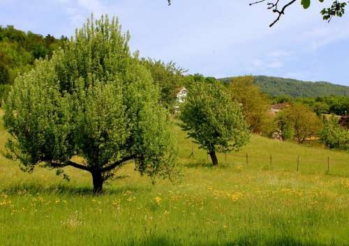 Nature Tree Landscape Meadow