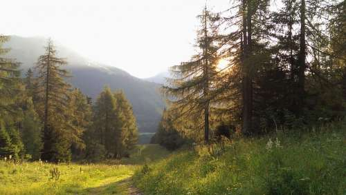 Nature Austria Styria Mountains Valley Woods