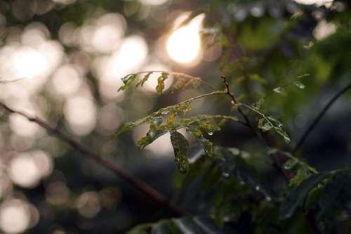 Nature Leaves Green Bokeh Plant Leaf Shine