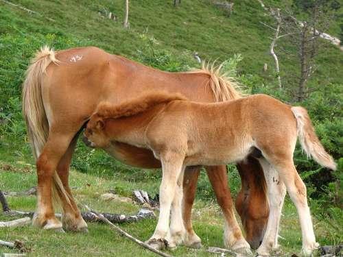 Nature Horses Colt Pastures Mammals