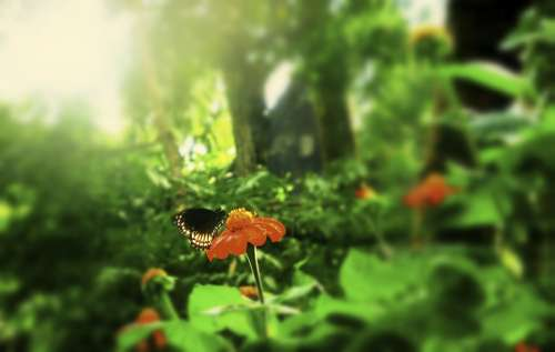 Nature Environment Butterfly Flower Summer Spring