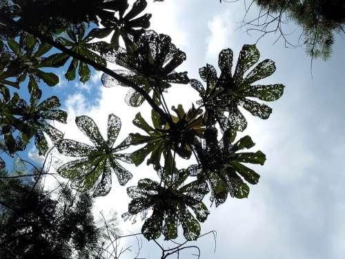 Nature Tree Sky Twigs Trees Plants Greens Leaves