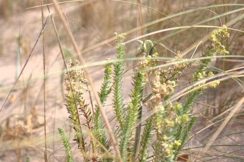 Nature Marsh Dune Barbate Natural Park Cadiz Spain