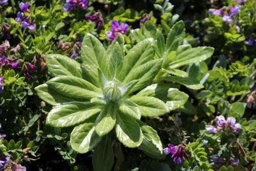 Nature Flower Flowers Plant Summer Green Forest