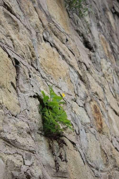 Nature Flower Rock Plant Stone Green Rocks