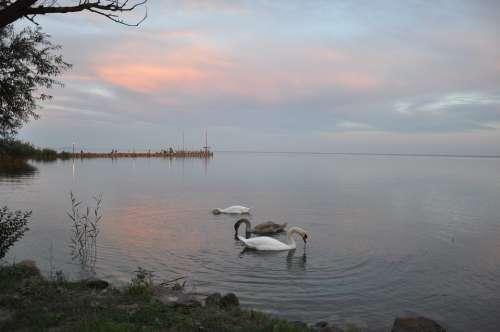 Nature Lake Balaton Lake Water