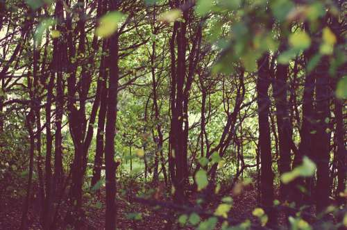 Nature Trees Retro Grunge Autumn Green Natural