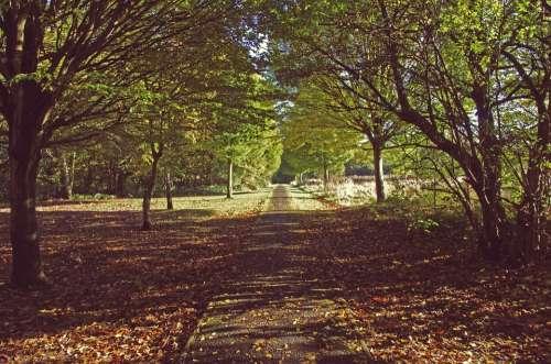 Nature Trees Path Green Natural Landscape Season