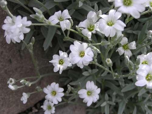 Nature Trailer Rock Plant White