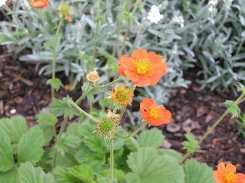 Nature Garden Plant Orange Rock Plant