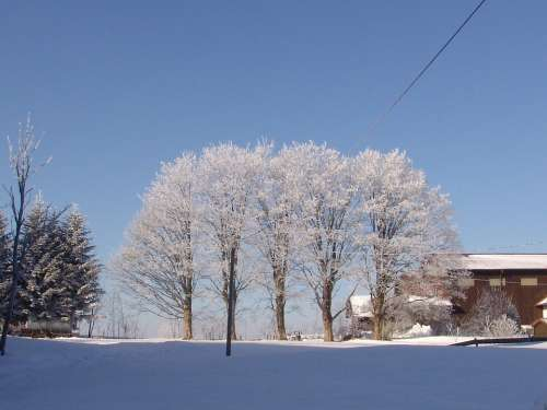 Nature Winter Tree