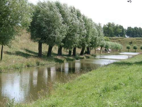 Nature Trees Water Natural Water Holland