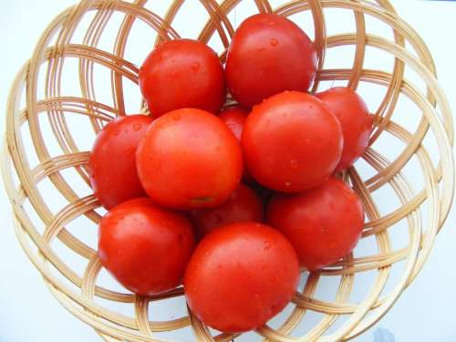 Nature Fruits Vegetables Tomatoes Red Tomato