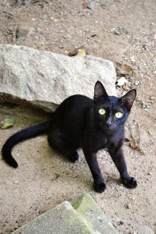 Naughty Black Cat Naughty Black Animal
