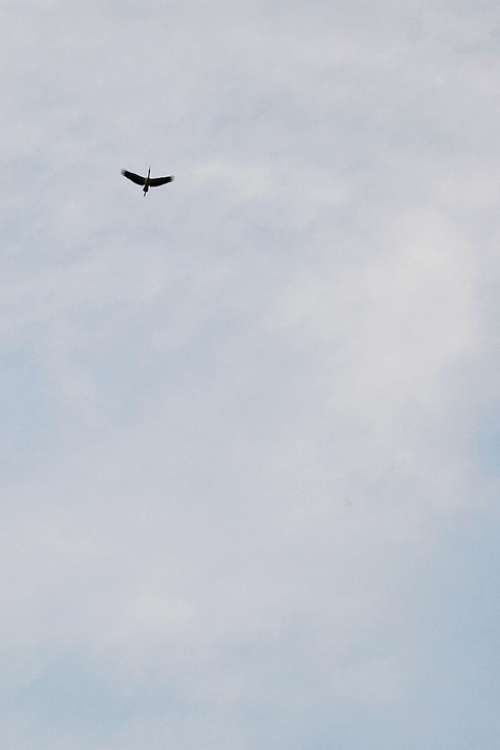 Negative Space Bird Fly Crane Birds Migrating Fly