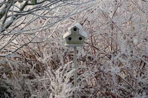 Nest Box Snow Winter Nature