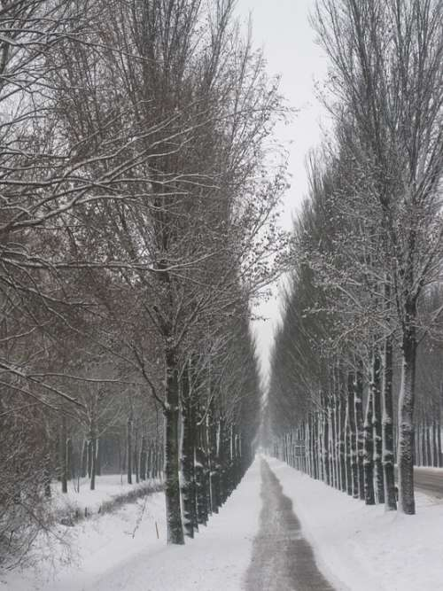 Netherlands Landscape Scenic Winter Snow Trees