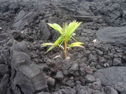 New Beginning Lava Nature Plant Volcanic Grow