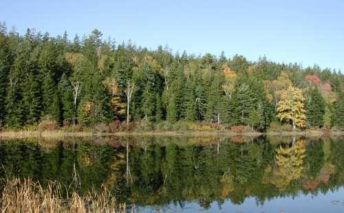 New England Pine Trees Nature Autumn Water Lake
