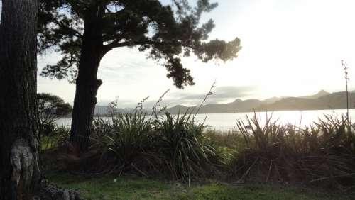 New Zealand Tree Wind Sea Coast