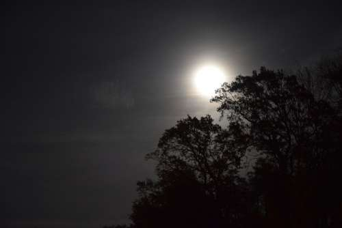 Night Moon Trees Moonlight Sky Shadow Nature