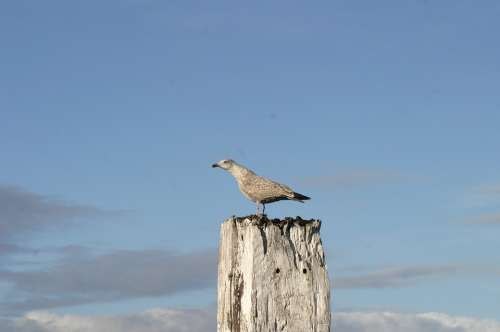 Norddeich Seagull Bird Sky North Sea Rest Idyll