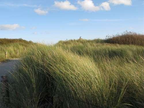 North Sea Dunes Lighthouse Beach Grass Wind