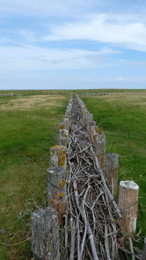 North Sea Dune Fixing Fence